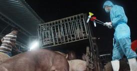 Kinh hoàng tồn dư chất cấm trong thịt heo 4.700 lần mức cho phép